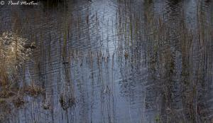 Relections_5
